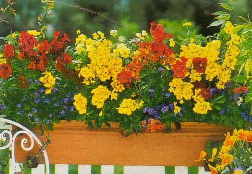 А в балконных ящиках можно выращивать цветы, которые постоянным.