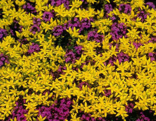 Цветы на кладбище купить оптом